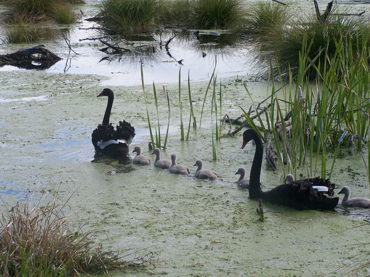 Peka Peka wetland NZ