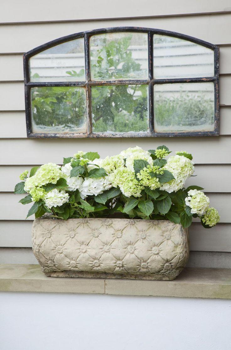 Leopoldina Haynes Garden: French window, cladding and white hydrangeas