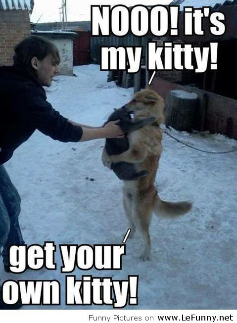 Get your own kitty, this is mine