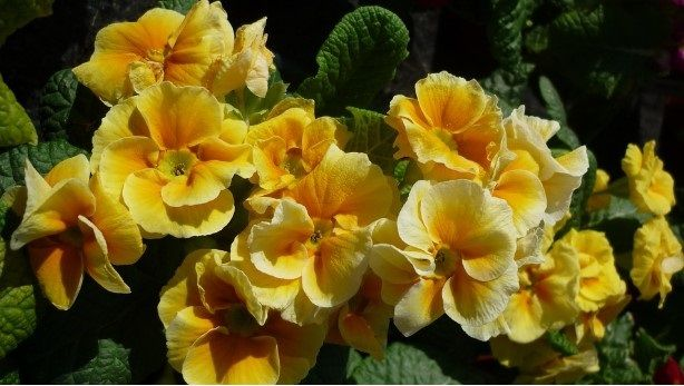 Yellow flowers types pictures flowerpictures flowers flowers yellow flowers types pictures flowerpictures flowers mightylinksfo