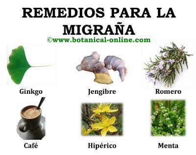 http://www.botanical-online.com/medicinalsmigranaremedios.htm (remedios para la migraña)