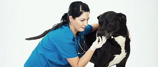 Curso  Técnico Auxiliar de Veterinária