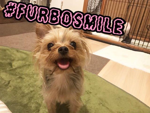 先日熱い戦いが繰り広げられたのち、フォロワ-1万人達成🙄⚡️シタ  @ikura_yorkie  いくちん🍣 から #笑顔のバトン 受け取ったで😛 . アメリカ🇺🇸で甚大な被害となっている 2つのハリケーンで被災したペットの為に @furbo_japan さんがアメリカの団体 @humanesociety に支援金を寄付するそうです。 さらにInstagramでShareされる毎に 1USドルが支援金に追加されるとの事✨ . Share方法は簡単です☝🏻 被災したペット達も笑顔になれるよう 愛犬愛猫の笑顔の写真のキャプションに #furbosmile を付けて投稿するだけ✨ . その際にお友達2人をタグ付けして 笑顔のバトンを繋げましょう😊😊😊 . 期限は9/19(火)23:59までです⏳ . . 台風地域の方大丈夫でしょうか、、テレビで見てたらすごい被害のあるところも.. 心配ですねこれわ。 . . #dog  #Yorkie #yorkshireterrier  #superdog_world  #all_dog_japan…