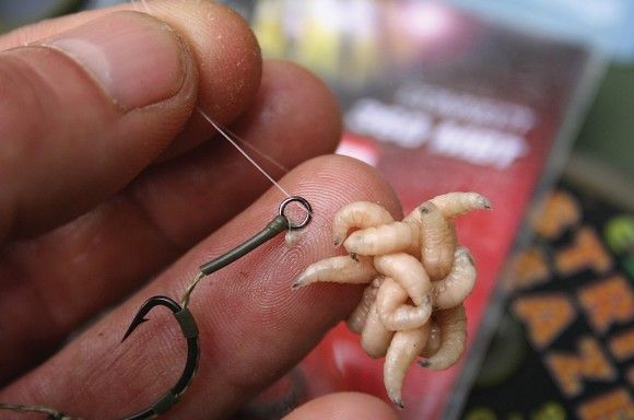 Nigel Sharp on maggot fishing - Articles - CARPology Magazine
