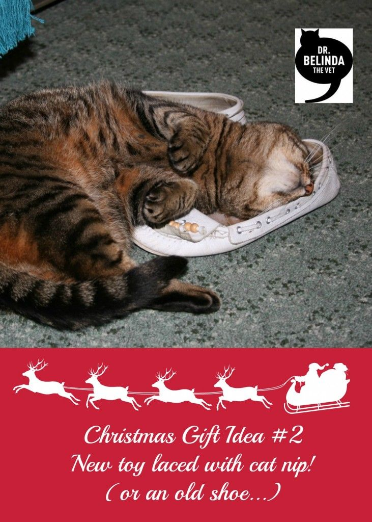 Christmas Gift Ideas for cats - New toy laced with cat nip!