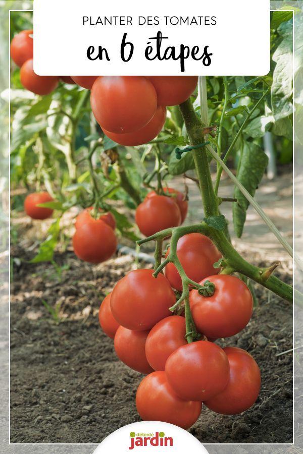 comment planter les tomates en 6 tapes tomates. Black Bedroom Furniture Sets. Home Design Ideas