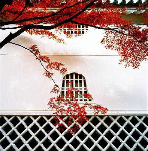 和の秋の色 japanese color in automn