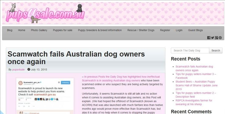 In previous Posts the Daily Dog has highlighted how ineffectual Scamwatch is in assisting Australian dog owners who have been scammed online or who suspect they are being actively targeted by scammers.  Unfortunately, it seems Scamwatch is still all talk and no action when it comes to assisting Australian dog owners -http://blog.pups4sale.com.au/scamwatch-fails-australian-dog-owners-once-again/