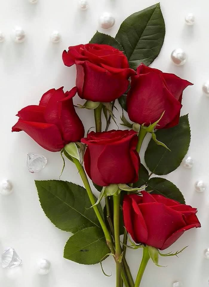 Red Roses For People I Love