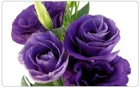 Image result for •	Lisianthus