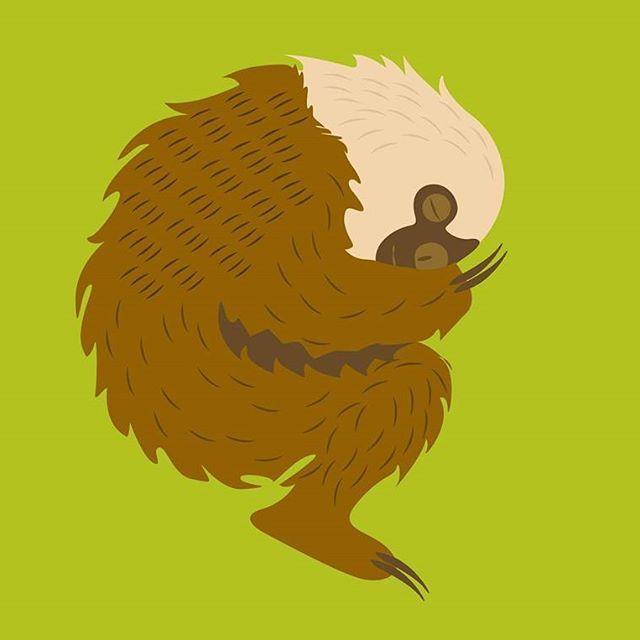 PEREZOSO DE DOS DEDOS  Nombre (Científico)Choloepus didactylus  El Perezoso de dos dedos de Hoffmann es una especie de perezoso de Centroamérica y América del Sur. El perezoso de dos dedos tiene una longitud de cuerpo de 46 a 86 cm y su peso oscila entre 4,1 y 9 kg. El pelaje es largo, grueso y ondulado, los cabellos son de color marrón con puntas de color crema. La cara tiene a menudo el mismo color que el cuerpo, las patas son a menudo marrón más oscuro.  Los Perezosos de dos dedos son…