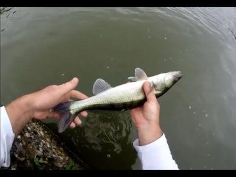 Pêche du sandre en canal trucs et astuces