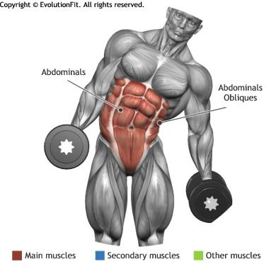 ABDOMINALS - DUMBBELL SIDE BEND
