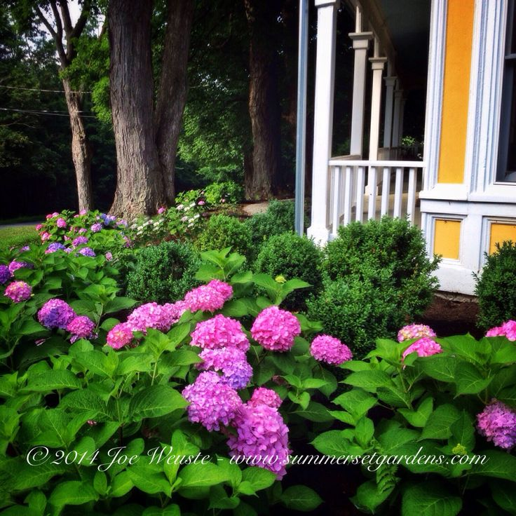 Victorian Front Garden On Pinterest: 33 Best Images About Front Yard Landscaping Ideas On