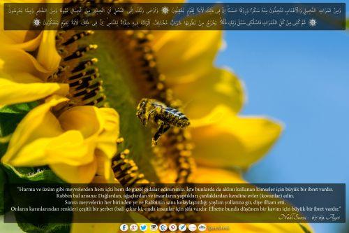 """""""..Onların karınlarından renkleri çeşitli bir şerbet (bal) çıkar ki, onda insanlar için şifa vardır. Elbette bunda düşünen bir kavim için büyük bir ibret vardır.""""  Nahl Suresi - 67-69. Ayetler Arası  #nahl, #sure, #ayet, #hurma, #üzüm, #arı, #bal, #kovan, #bee, #Allah, #god, #religion, #islam, #resimliayet, #balarısı, #şerbet, #şifa, #ibret"""