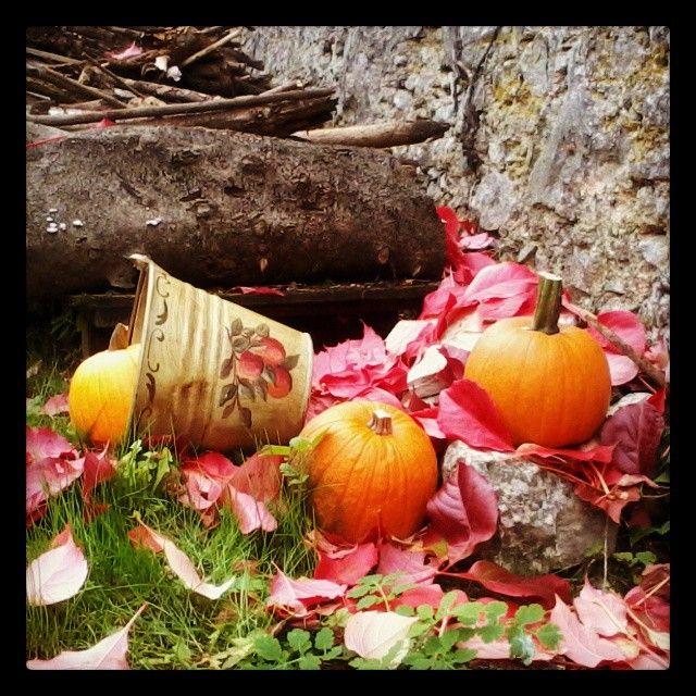 #Autunno | #fall #Autumn #Halloween #pumpkin àorange #red #countryside #MyInstagramPhoto #igersitalia #igers