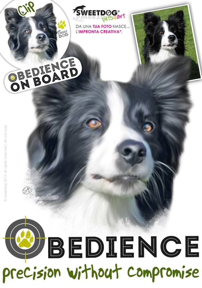 Dog. Clip (Border Collie) - OBEDIENCE - Personalized T-Shirt and Sticker | www.facebook.com/SweetDogStore