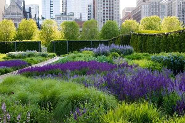 Great use of Salvia (dark purple), Baptisia australis (blue in the distance) and Amsonia (light blue at right). Lurie Garden- Chicago.  Photo by Robin Carlson #gardens