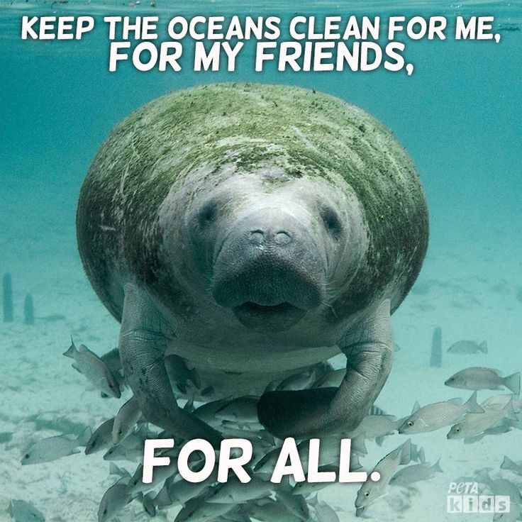 Happy Manatee Appreciation Day! <3 Talk to your students about the importance of keeping the ocean clean and protecting wildlife. #ManateeAppreciationDay #HumaneEducation #OceanLife #Conservation #Compassion #AnimalRights #KindTeachers