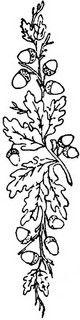1886 Ingalls Oak Branch | Flickr - Photo Sharing!