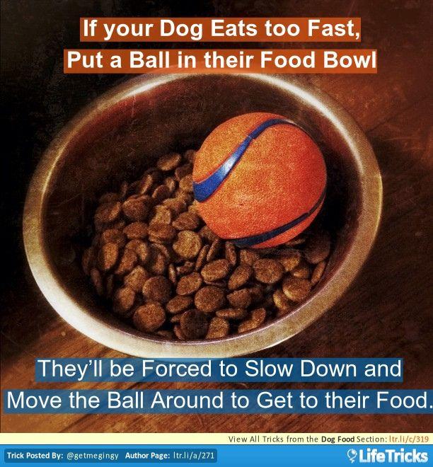 My Dog Eats His Food Too Fast