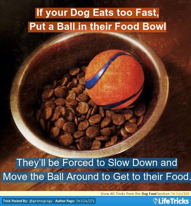 Dog Food - If your Dog Eats too Fast, Put a Ball in their Food Bowl