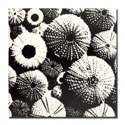 Sea the urchin