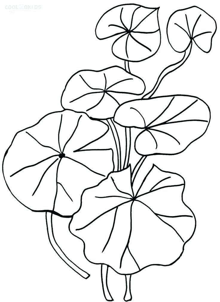 736x1009 amazing lily pad coloring page for gallery for
