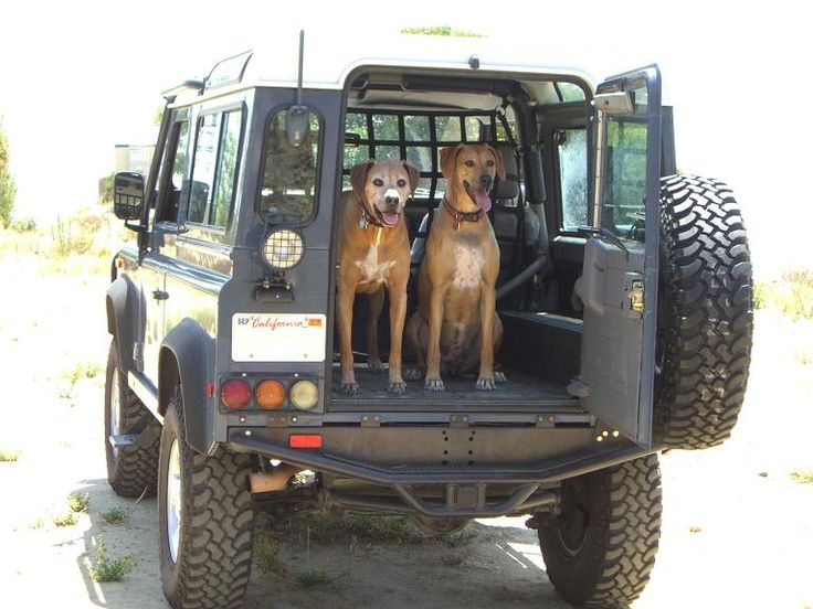 Safely Having Dogs In Truck Bed