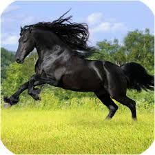 Imagini pentru imagini cai