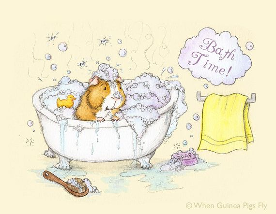 Guinea Pig Bath Time Fine Art Guinea Pig Art by WhenGuineaPigsFly, $10.00