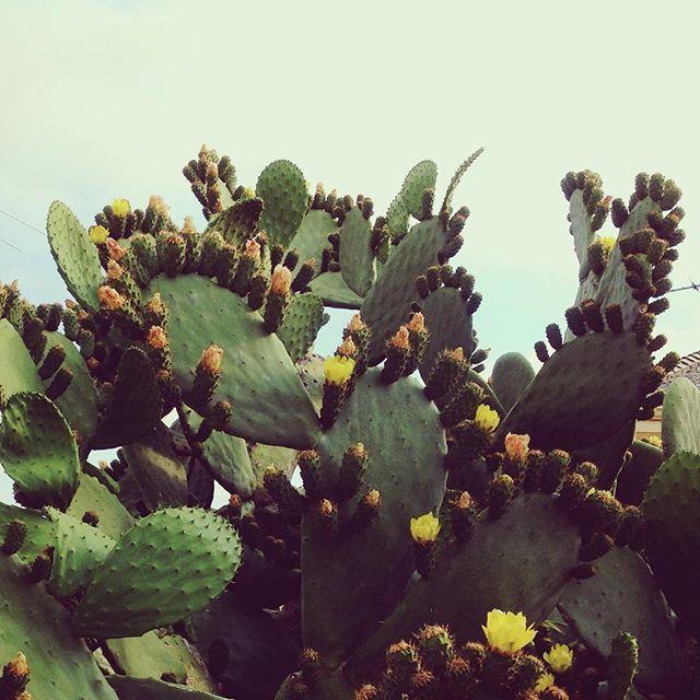 Spring walks #cactuscountry #springhassprung
