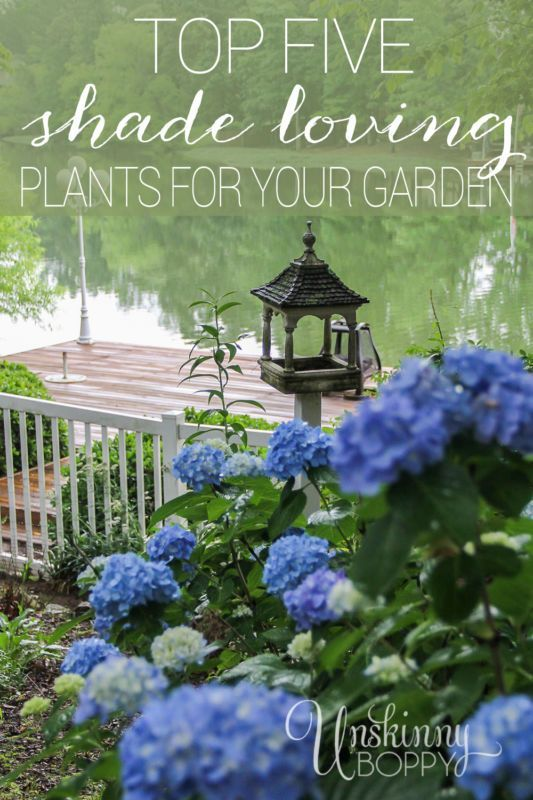 Finding the right plants for a shady garden can be a challenge, but there are plenty other shade loving plants besides just lichen and moss. Here are the Top Five Shade Loving Plants for your Garden! Click photo to read more...