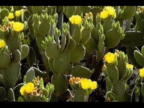 Edible Plants of the Southwest
