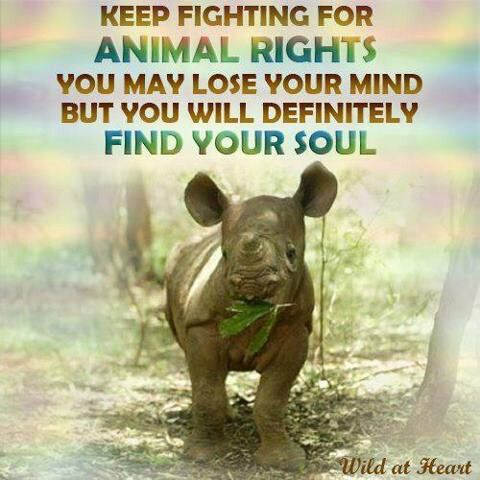 Keep fighting for animals rights. You may lose your mind, but you you will definitely find your soul.