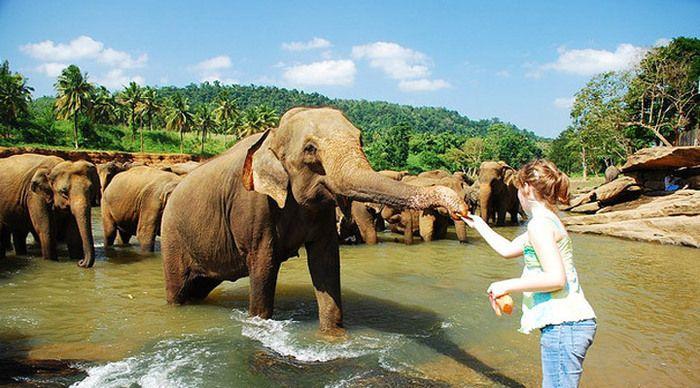 """Kerala – paradiset i södra Indien med smeknamnet """"Gods own country"""". Ett exotiskt resmål med den frodiga grönskan, sandstränderna med kokospalmer, kardemummabergen, ris- och kaffeodlingarna och ett underbart tropiskt klimat. Delstaten är mycket välmående ur ett ekonomiskt och socialt perspektiv med landets högsta läskunnighet och jämställdhet."""