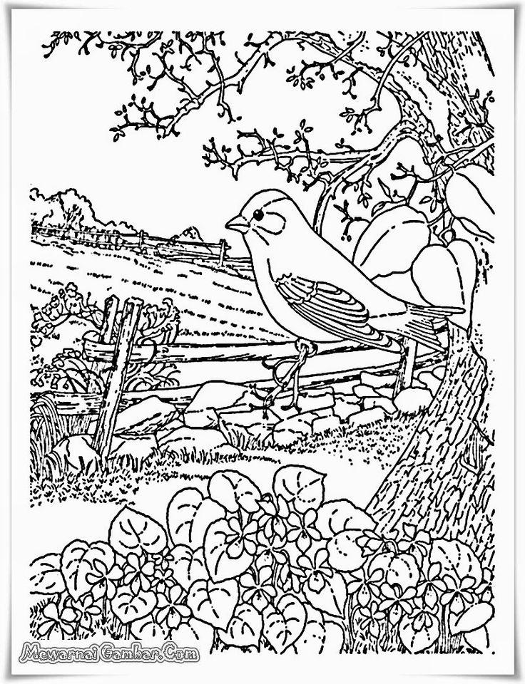 buku mewarnai gambar pemandangan sawah dan kebun