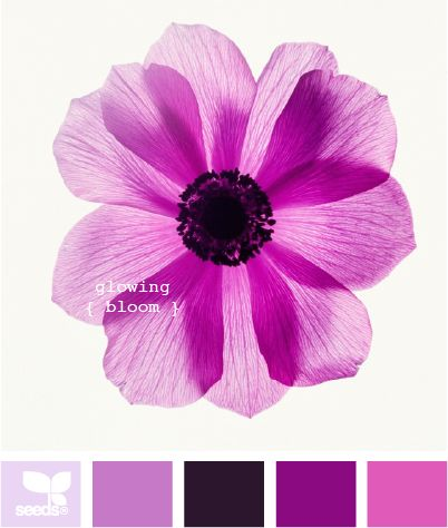 lilac #colors #flowerBeautiful Flower, Shades Of Purple, Glow Bloom, Design Seeds, Beautiful Colors, Bloom Purple, Colors Palettes, Wedding Colors, Colors Schemes
