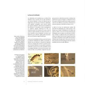 Planète COLLEMBOLES, la vie secrète des sols de Jérôme Cortet et Philippe Lebeaux | Arthropodus