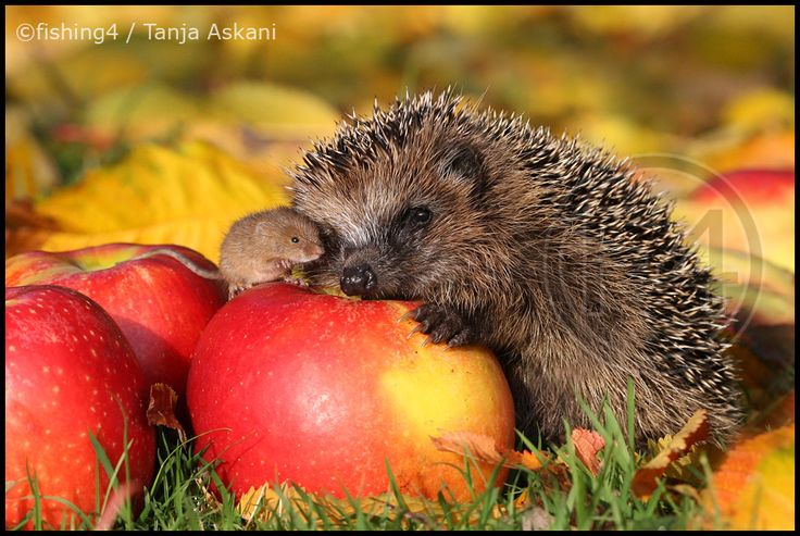 Pictures of the autumn in the Franconia | The most beautiful animals / animal pictures in the world (Page 86) – Allmystery