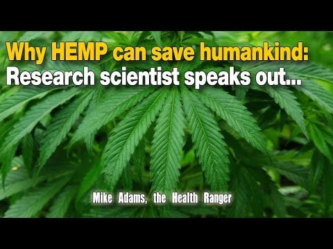 Why HEMP can save humankind: Research scientist speaks out… | GLOBAL ELITE TV | ALTERNATIVE MEDIA