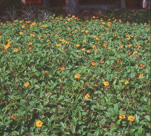 17 Best Images About Garden Checklist September On 640 x 480