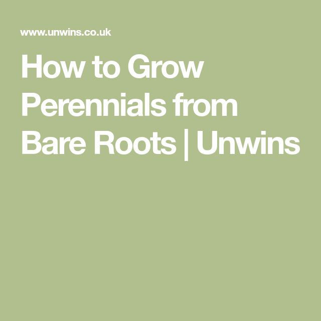 How to Grow Perennials from Bare Roots | Unwins