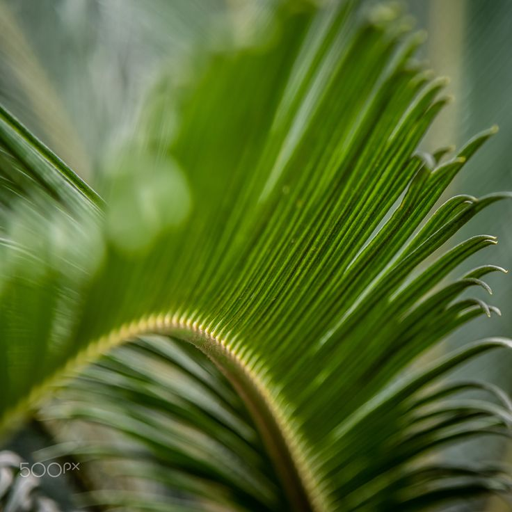 Green - Foto: Ewald Gruescu | https://fb.com/ewald1991