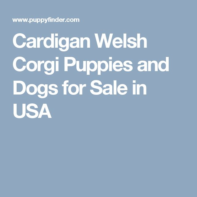 Cardigan Welsh Corgi Puppies and Dogs for Sale in USA