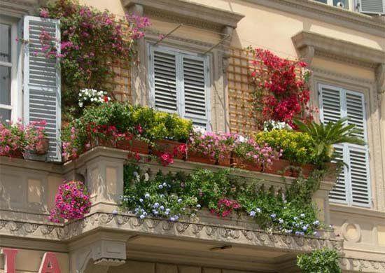 Három gyönyörű egynyári virág a balkonra!