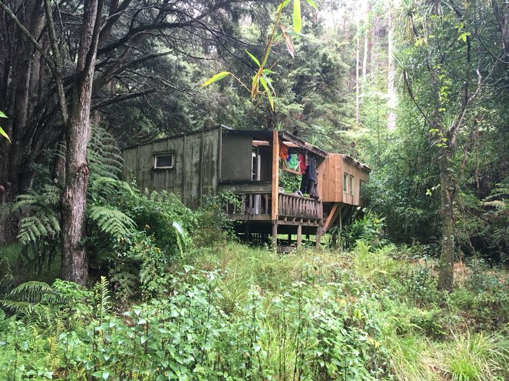Bush hut, Matapouri