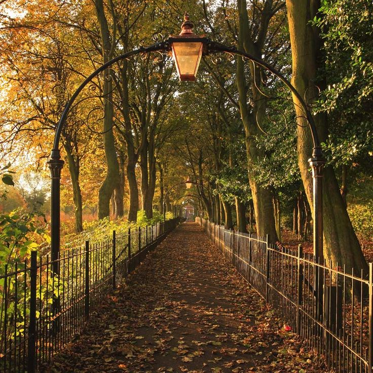 """Nunsmoor Park, Newcastle Upon Tyne"" by Andrew Whitaker"