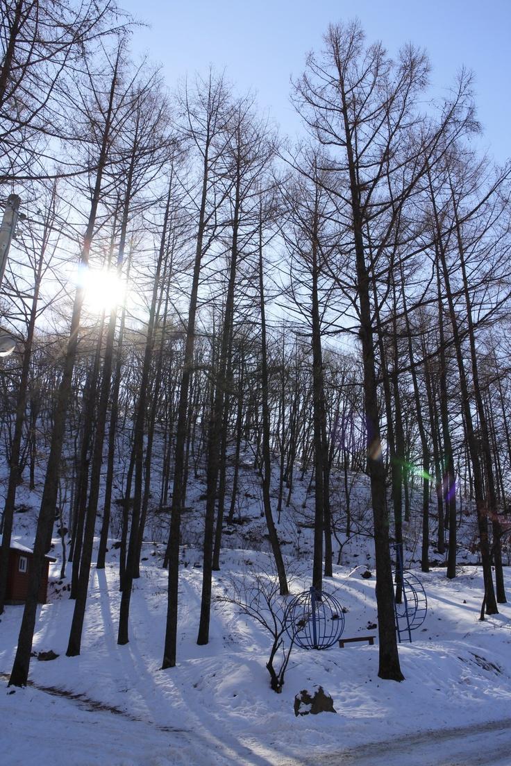 Forest of Yangpyeong KOREA