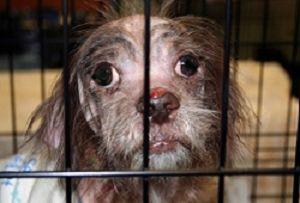 Ook in Nederland zijn er nog veel verwaarloosde, mishandelde en in de steek gelaten dieren in nood. Stichting DierenLot trekt zich het lot van deze dieren erg aan en wil hen graag helpen. Help mee alstublieft en kies hier de manier die bij u past.